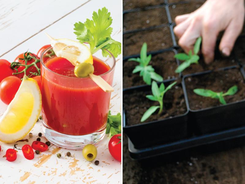 Grow-A-Garden Workshop
