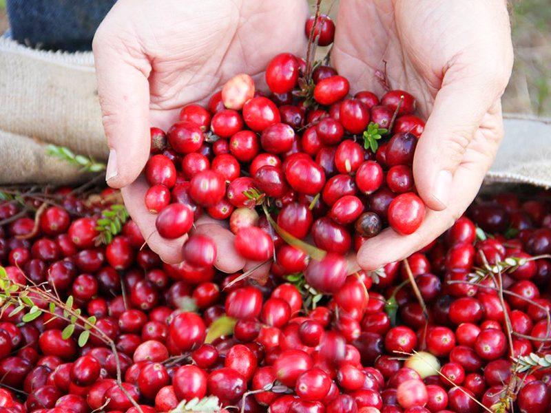 Local Ruesch Cranberries